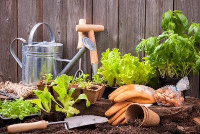 Εργασίες για τον κήπο το φθινόπωρο