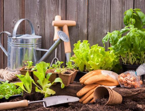 Κήπος το φθινόπωρο: Εργασίες κηπουρικής & φθινοπώρου